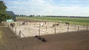 Paddocks zijn klaar, paarden elke dag 3 uur naar buiten.